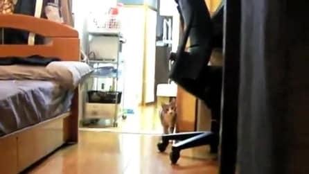 Il gatto che gioca a nascondino