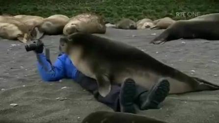 Fotografo si avvicina ad una foca: lei lo abbraccia e non lo lascia più