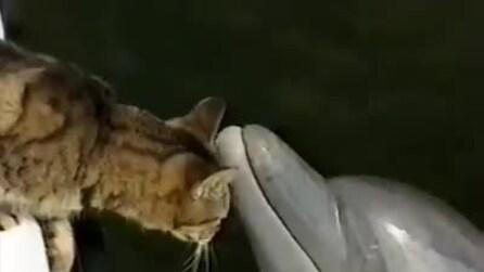 Un gatto e un delfino imparano a conoscersi