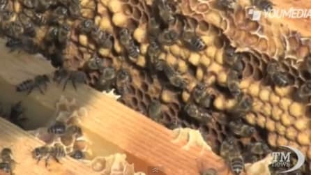 Le api, il rimedio naturale anche contro la sclerosi multipla