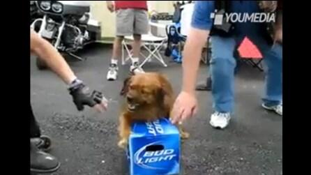Il cane che fa la guardia alle birre
