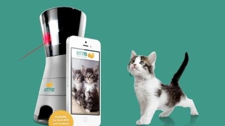 In arrivo l'app che dà da mangiare al tuo gatto