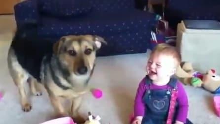 Cane provoca lunghe risate al piccolo