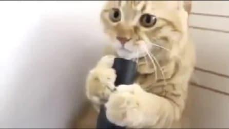 Il gatto aspirante colf: pazzo per il tubo dell'aspirapolvere