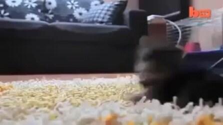 Il più piccolo cane al mondo