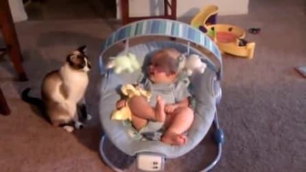 Comisky, il gatto baby sitter che sa come far divertire la sua piccola amica
