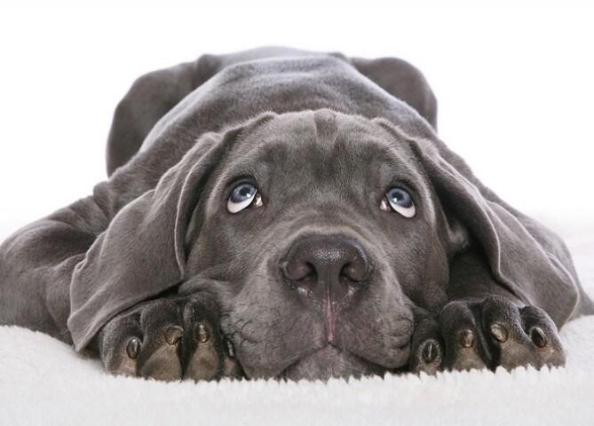 Il Cane Mangia Tutto Quello Che Trova Per Terra Cosa Devo Fare