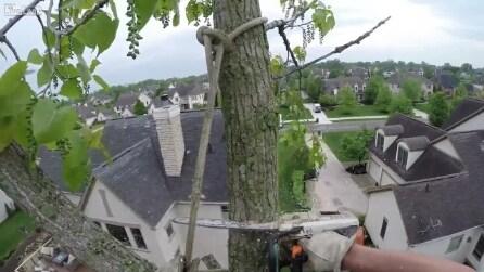 Giardiniere scalatore: sale a 21 metri d'altezza per potare gli alberi