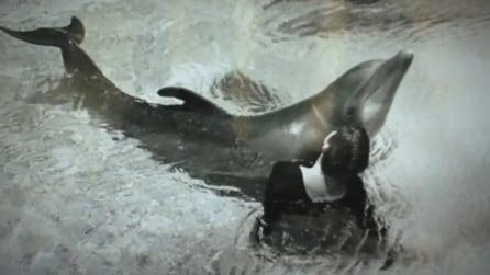 La scienziata che ha avuto rapporti intimi con un delfino