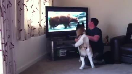 Cosa ci fa un orso in casa? Cane protegge i suoi padroni