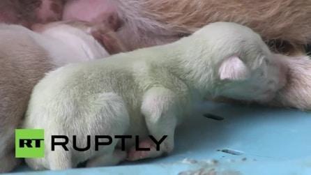 Spagna, da una cucciolata nati due cani labrador dal pelo verde