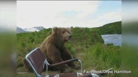 A tu per tu con un orso bruno: l'incredibile esperienza di un campeggiatore