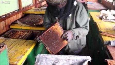 Ecco come si allevano le api