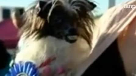 Occhi e denti sporgenti: ecco il cane più brutto al mondo
