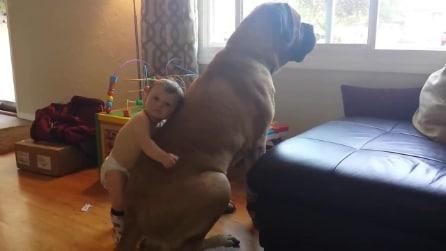 Bimbo tenerissimo si sente al sicuro abbracciando il cane più grosso del mondo