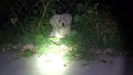 Il salvataggio di Lola, il cane abbandonato per strada durante le feste