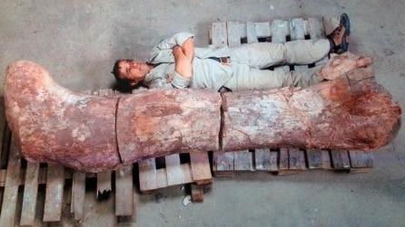 Patagonia, le ossa del dinosauro più grande della storia