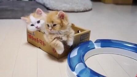 Mamma gatto ha coccole per tutti i suoi cuccioli
