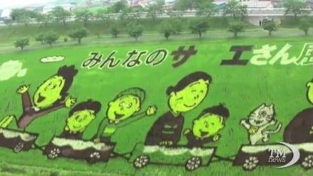 Giappone, l'arte del riso: contadini trasformano campi di risaie in quadri
