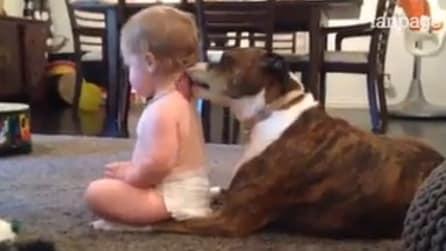Il cane coccola il suo piccolo padroncino