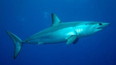 Ostia, sorpresa tra i pescatori ecco uno squalo Mako