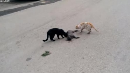 Gatti vegliano sul loro amico, appena investito da un'auto