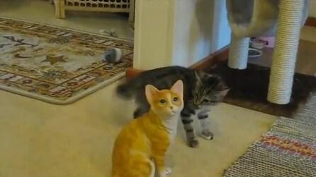 Ecco la reazione di un gatto di fronte alla statua di un suo simile