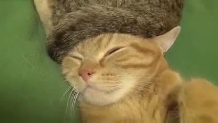 Cosa ci fa un gatto col colbacco?