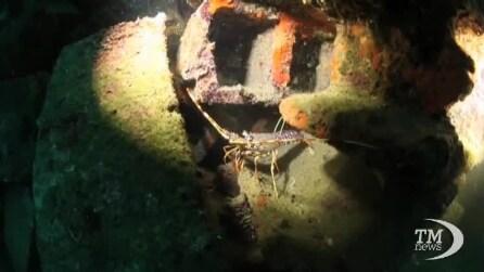 Nuova vita per le aragoste rosse nei fondali della Costa Azzurra