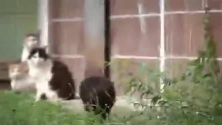 Il topolino che mette in fuga i gatti