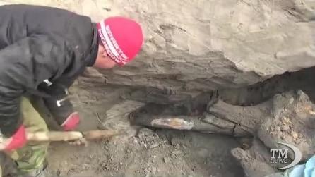 Torna alla luce Zhenya, il mammut scoperto da un undicenne