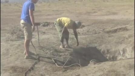 L'elefantino cade in una buca: salvato