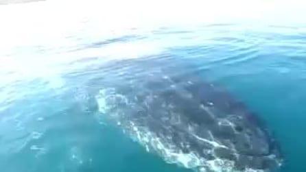 Incontro ravvicinato con le balene, a bordo di una canoa