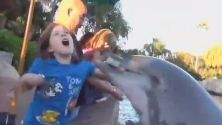 """Delfino """"affamato"""" morde una bambina di 8 anni"""