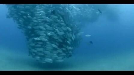 Tornado di pesci nelle acque del Messico