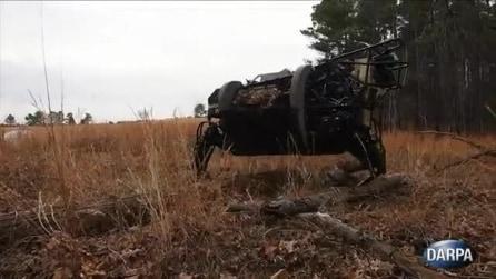 Un mulo-robot segue il suo padrone