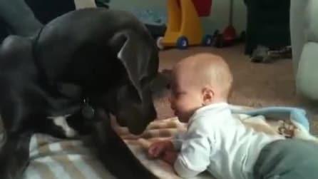 Il cane che fa le coccole al suo piccolo padrone
