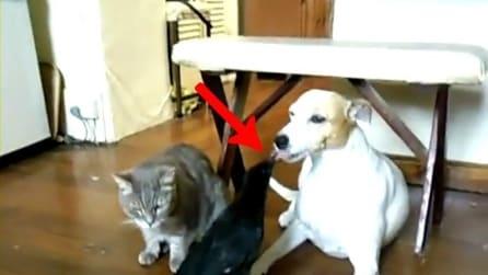 Il corvo che fa mangiare il cane e il gatto