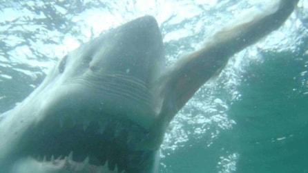 Sub sorpreso: incontro ravvicinato con uno squalo