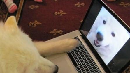 "Webcam a 4 zampe, due cani ""parlano"" tra loro su skype"