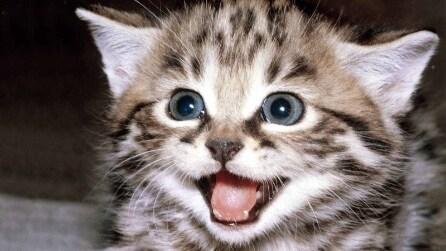 Non mi toccare! Un gatto che non vuole essere accarezzato