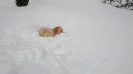 Il cane è felice ma affonda completamente nella neve