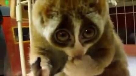 Kinako, l'animaletto più gentile e dolce del pianeta!