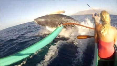 Una balena sbuca all'improvviso vicino una canoa