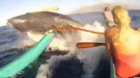 Balena salta su imbarcazione. Succede alle Hawaii
