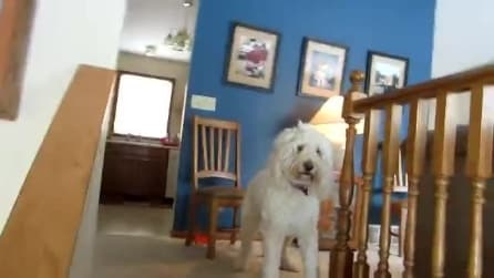Due padroni uguali, la strana reazione del cane