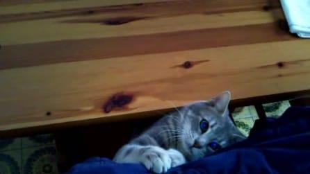 Zampate feline!