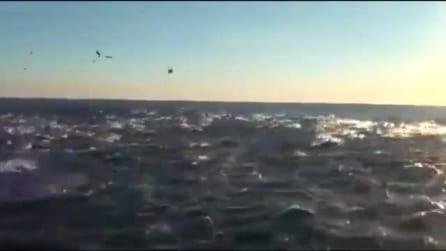 Un branco di migliaia di delfini nelle acque di San Diego