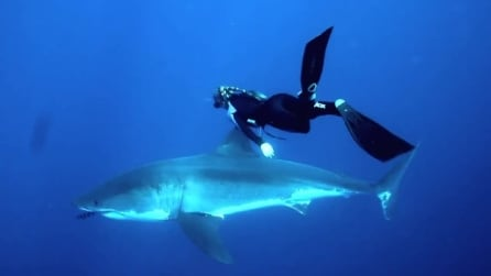 Una ragazza nuota insieme a un gigantesco squalo bianco