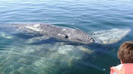 Un cucciolo di balena che ama le carezze